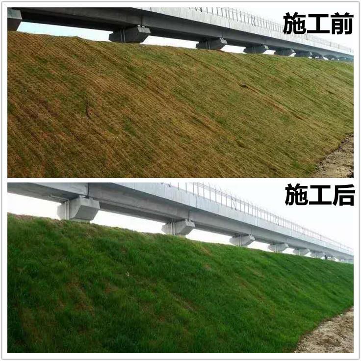 山东盛鹏环保绿化草毯 pp环保椰丝生态毯 矿山修复护坡专用椰丝毯示例图2