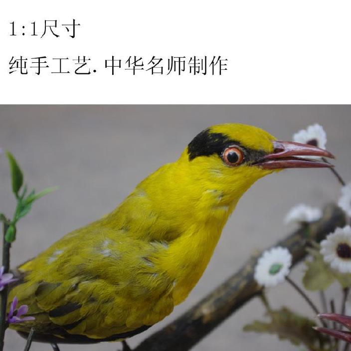 真小鸟仿真动物v小鸟黄丽摆件皮毛鸟黄鹂标本工美标手压阀图片