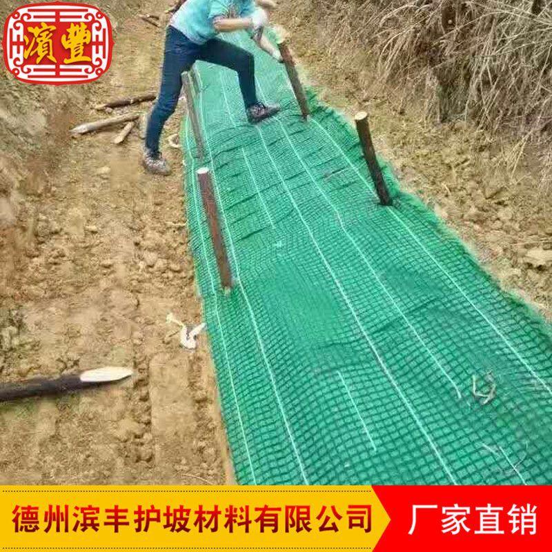 多层加强筋植被垫 滨丰护坡 植草毯环保护坡植被垫示例图12
