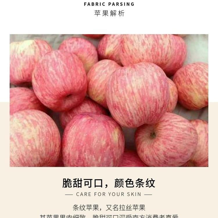 山东烟台红富士苹果 诚磊水果脆甜红富士非陕西红富士 5斤装一件代发