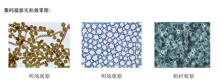 四川倒置显微镜价格 XDS-2 倒置生物显微镜 留辉科技公司供应示例图7