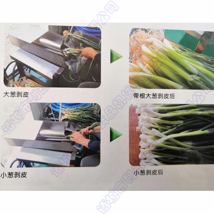 利杰LJ-350小葱去皮机 大葱去皮机 韭菜去皮机 厨房小型葱去皮机 蔬菜配送大葱脱皮机 厂家直销示例图7