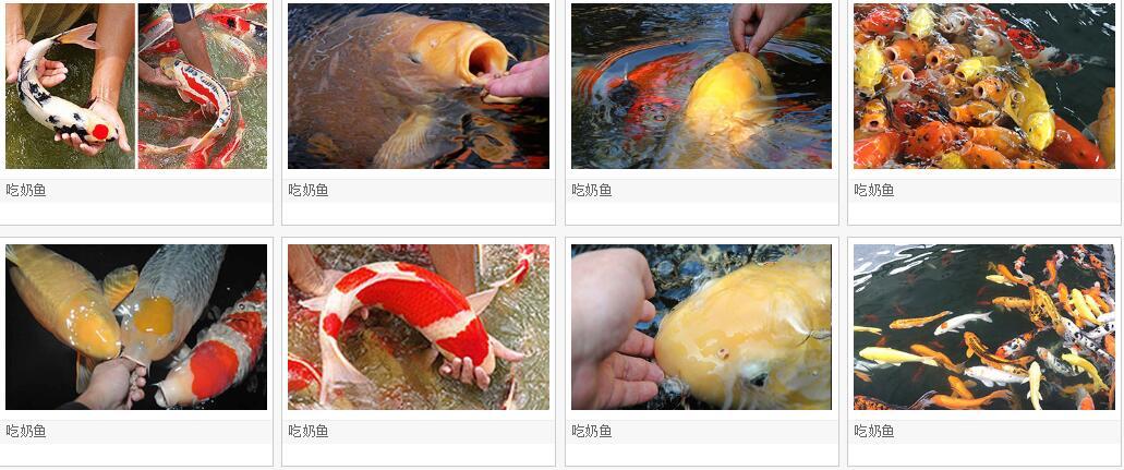 河南 郑州2020 吃奶鱼 游乐设施  儿童吃奶鱼设施厂家 批发价格示例图11