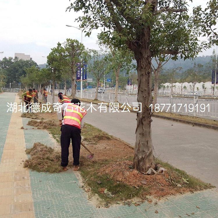 园林绿化工程施工常绿承接绿化工程行道树货源配送示例图1