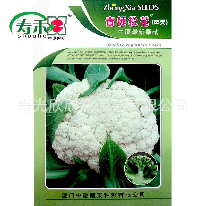忠夏绿茎松花85天松花种子晚熟花椰菜种子耐寒耐湿蔬菜