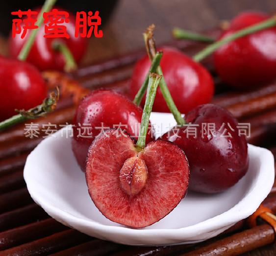优质红灯樱桃树 基地大量批发嫁接樱桃树 品种齐全 俄八樱桃苗示例图9