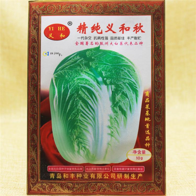 纯正内涵与优质秋季大白菜种子