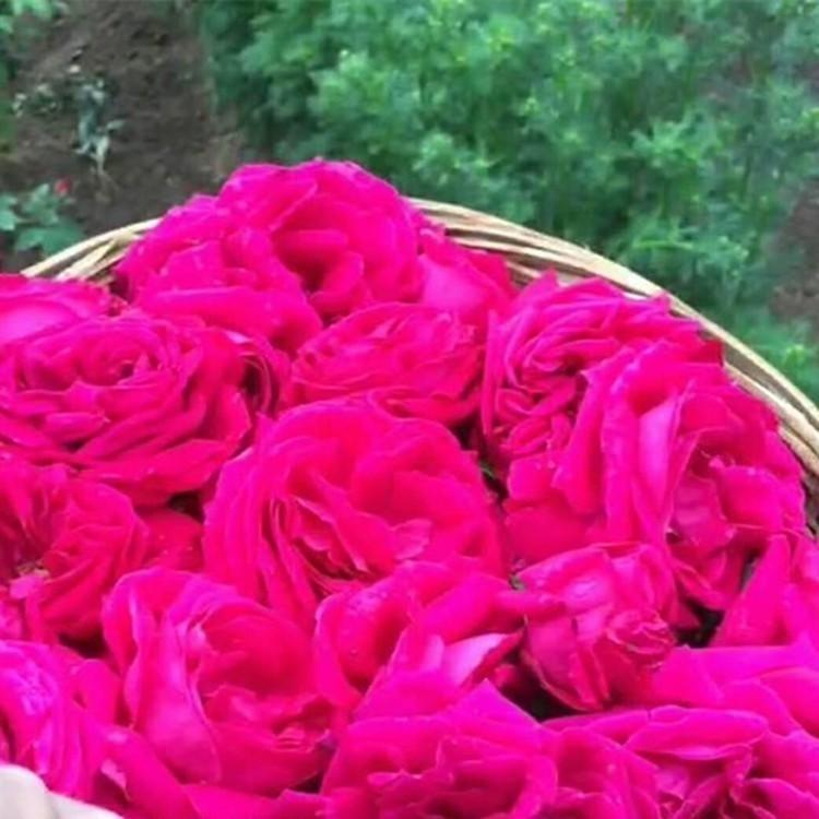 加厚级25升玫瑰纯露塑料桶 50斤食品级塑料桶 河南包装桶厂家