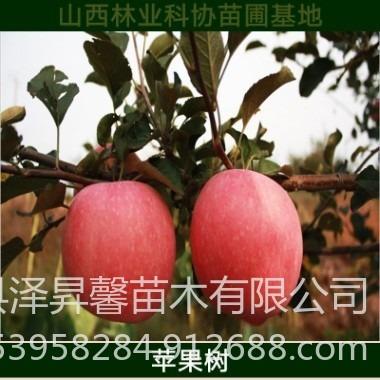 當年結果樹苗山西蘋果樹價格 現挖現賣矮化蘋果樹品種純 價格優