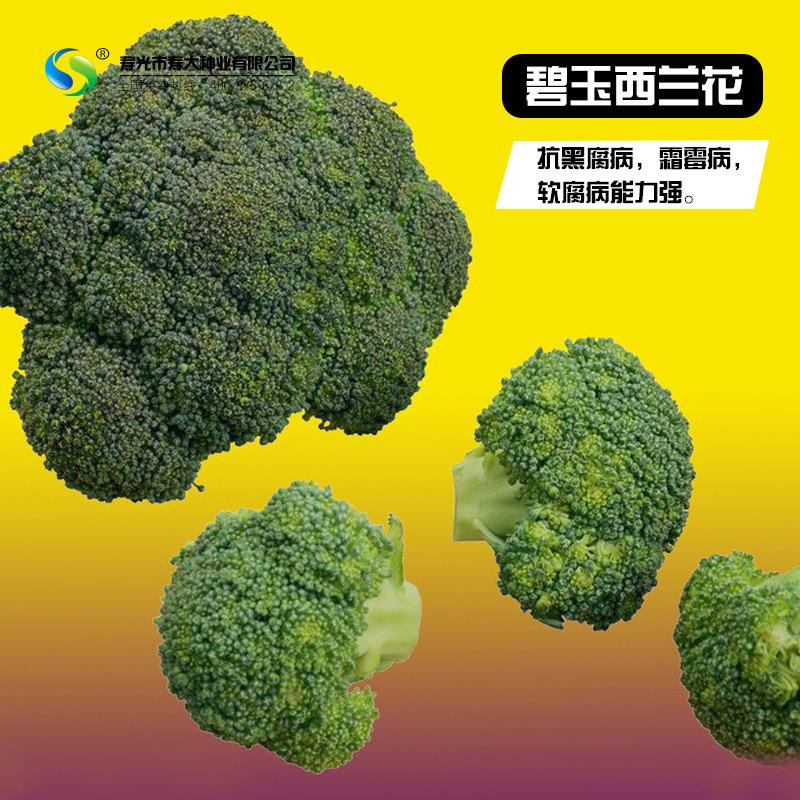 [碧玉西兰花种子]春播蔬菜种子适合春秋两季栽培,约1000粒种子