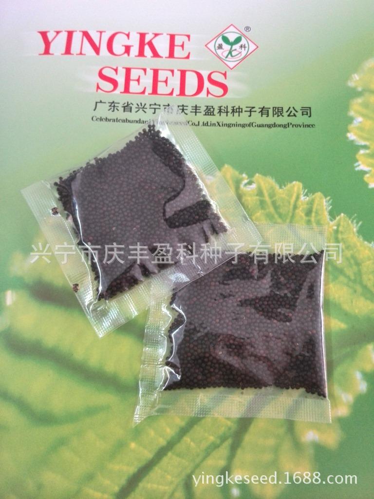 15g:一年生清江白菜种子-8011种子可四季种植-批量