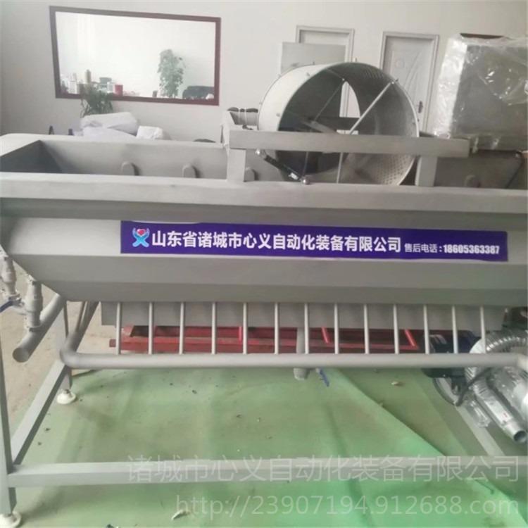 萝卜清洗机 毛辊清洗机  胡萝卜毛辊清洗流水线XY-600型心义自动化