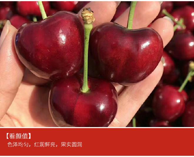优质红灯樱桃树 基地大量批发嫁接樱桃树 品种齐全 俄八樱桃苗示例图6