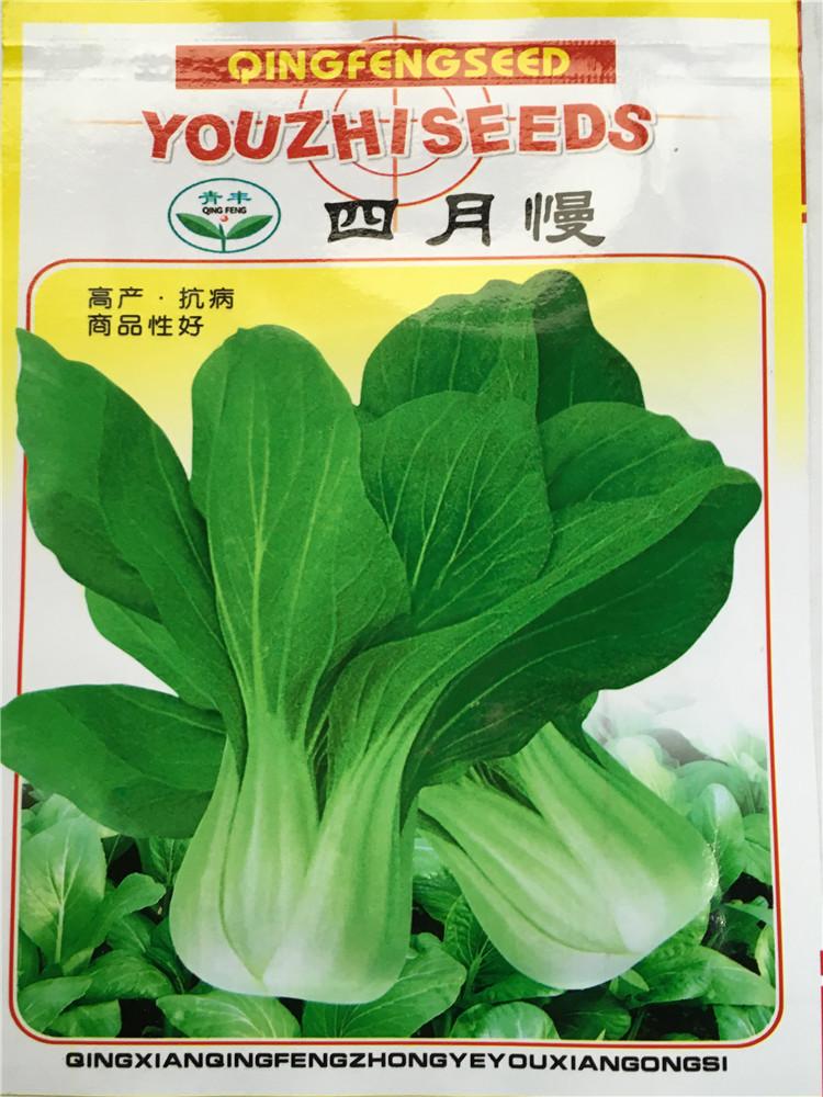 四月慢白菜种子小油菜白菜种子阳台花园蔬菜种子耐寒