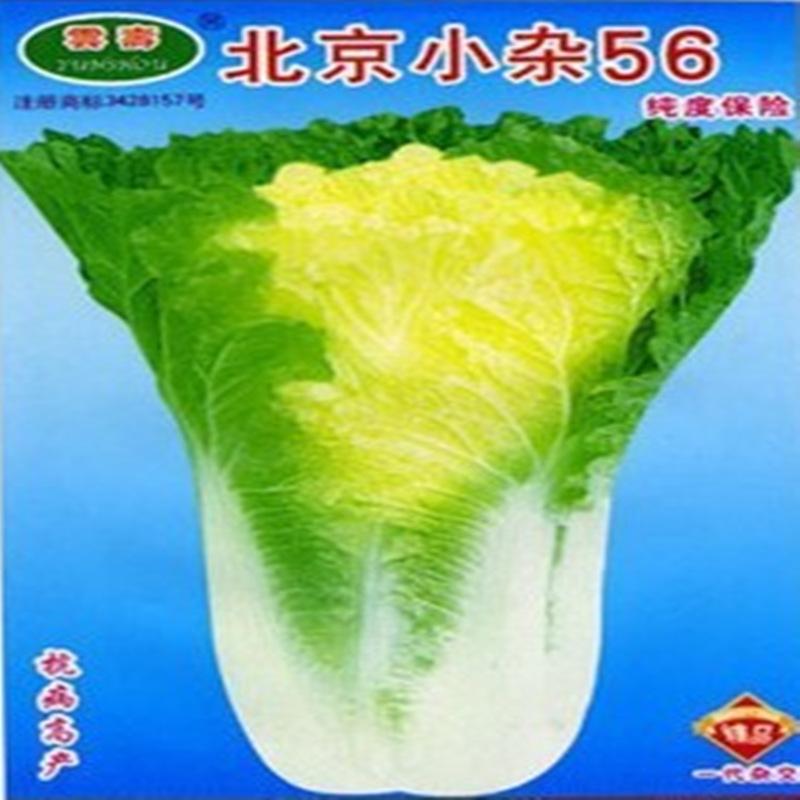 批发各种蔬菜种子、四季速食蔬菜、白菜种子、蔬菜种子、水果和蔬菜