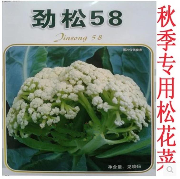 劲松58/68/75/90松花籽绿茎蔬菜秋季