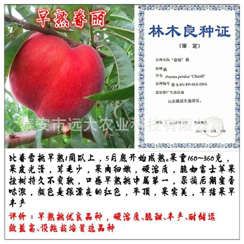 映霜红桃树苗  桃苗价格优惠 成活率高达98% 晚熟雪桃品种示例图5