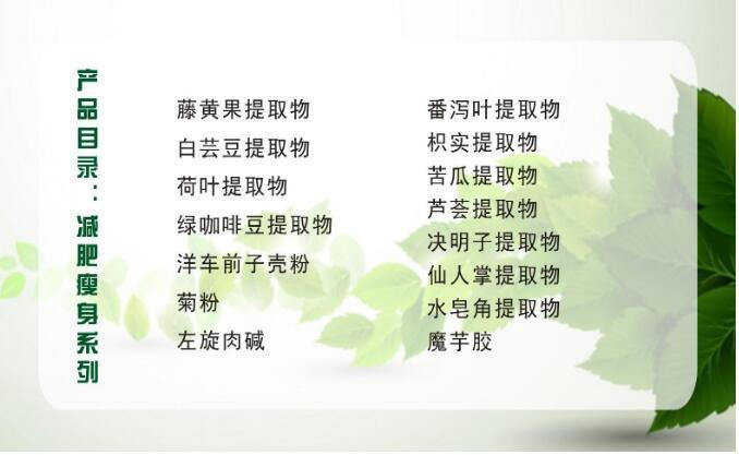 迷迭香酸 迷迭香提取物 純植物提取示例圖7