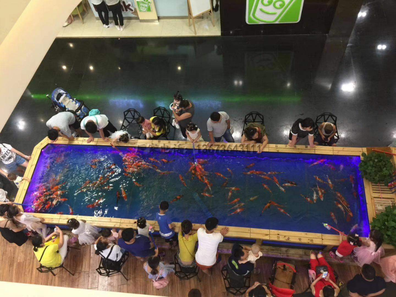 吃奶鱼和旋转秋千鱼升级进化活鱼 们玩的开心吃奶鱼也叫长寿鱼喂奶鱼,娃娃鱼或者 鱼,溜溜鱼,奶嘴鱼示例图22