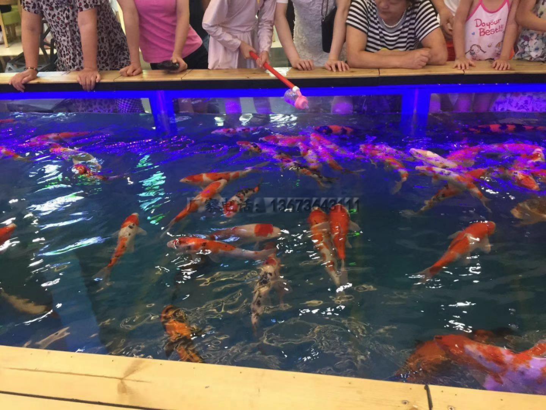 吃奶鱼和旋转秋千鱼升级进化活鱼 们玩的开心吃奶鱼也叫长寿鱼喂奶鱼,娃娃鱼或者 鱼,溜溜鱼,奶嘴鱼示例图23
