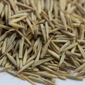 冰草种子批发 冰草种子价格  一斤起发货  量大优惠