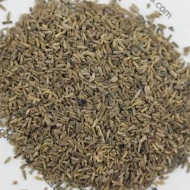 白晶菊种子批发格,一斤起发货,基地直发